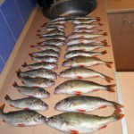Zimnjaja rybalka na okunja9
