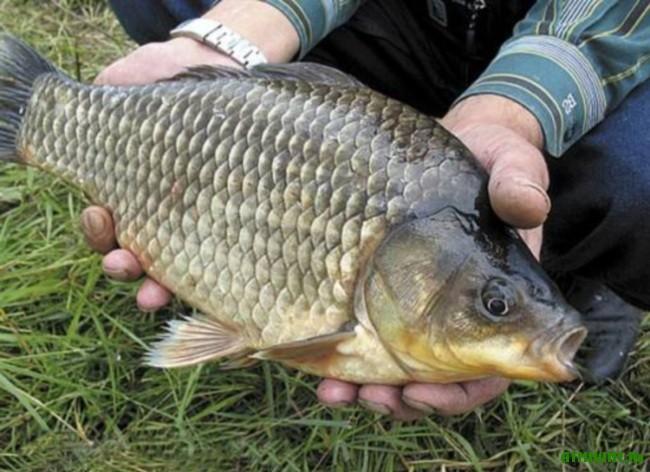 Rybalka na karasja. Rekomendacii opytnogo rybolova3