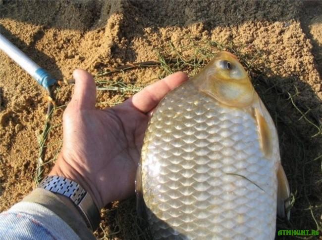 Rybalka na karasja. Rekomendacii opytnogo rybolova6
