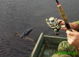 24-marta-pod-belgorodskom-projdet-turnir-po-lovle-xishhnoj-ryby