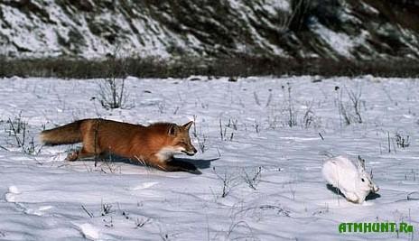Архангельская область охота на лося