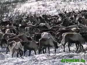 Uvelichenie populjacii zhivotnyh v Novosibirskoj oblasti