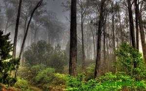 V Jestonii lesovladel'cy mogut ne razreshat' ohotit'sja na ih territorii