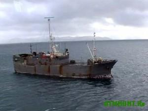 V Kerchi brakon'ery vylovili 28 tonn ryby