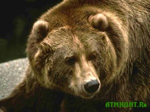 Zimnjaja spjachka tomskih medvedej budet dolgoj