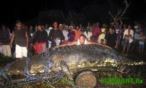 iz-za-surovoj-zimy-v-filippinax-umer-gigantskij-krokodil