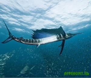 malazijskij-rybak-kakim-to-chudom-ucelel-posle-ataki-mech-ryby