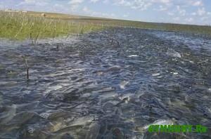 na-zaporozhi-budet-dvuxmesyachnyj-zapret-lovli-ryby-vo-vremya-neresta