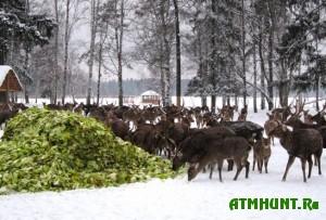 oxrana-i-podkormka-zhivotnyx-v-zimnij-period-v-gosudarstvennom-predpriyatii-oxotniche-xozyajstvo-stir