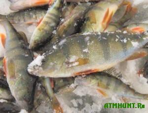 razoblacheno-massovoe-brakonerstvo-vylova-ryby-na-ternopolshhine