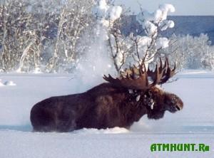 v-chelyabinskoj-oblasti-oxota-priznana-nezakonnoj-u-vosmi-xozyajstvax