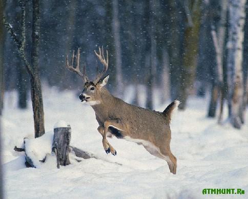 v-poltavskoj-oblasti-obnaruzheno-141-narushenie-za-etu-zimu