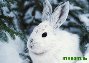 v-ternopolskoj-oblasti-nalozheno-shtrafov-na-summu-25-tis-griven-za-period-oxotnichego-sezona-2012-2013-godov