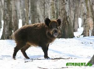 v-ugodyax-lvovshhiny-provoditsya-zimnij-uchet-oxotnichej-fauny
