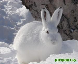 za-ubijstvo-zajca-shtraf-desyat-tysyach-rublej