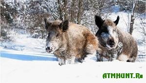 Dikie zhivotnye Vitebskoj oblasti spokojno perezhili zimu