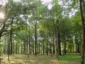 Dnepropetrovskij leshoz otnimaet territorii u ohotnikov