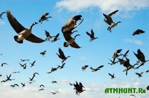 Iz-za sil'nyh morozov v Belarus' ne speshat pereletnye pticy