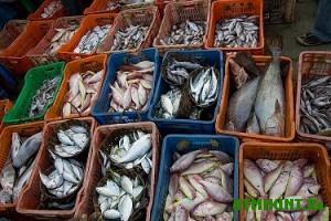 Kaliningradskie rynki napolneny brakon'erskoj ryboj