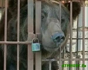 Ohotnika oshtrafovali za izdevatel'stvo nad medvedicej