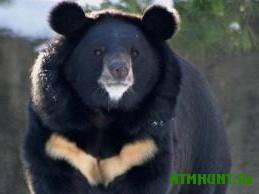 Primorckie zhurnalisty ishhut den'gi dlja medvedej, zhivushhih u pensionerov