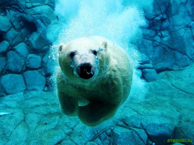 Sreda obitanija belogo medvedja