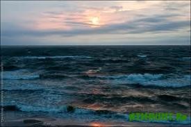 Uchenye ocenili zapasy donnyh ryb v Baltijskom more