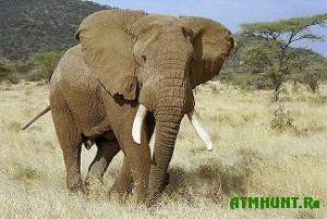 V Tailande likvidirujut nelegal'nyj rynok slonovoj kosti