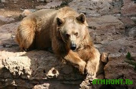 V zooparke v Mene probudilis' burye medvedi