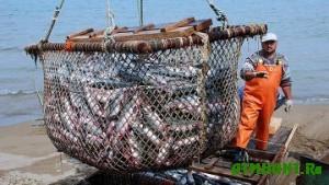 Za janvar' ukrainskie rybaki dobyli 11000 tonn ryby