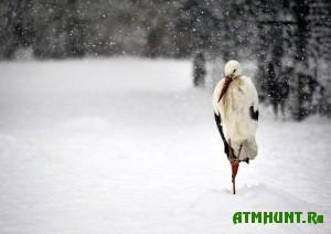 na-lvovshhine-pticy-gibnut-iz-za-bolshogo-snega