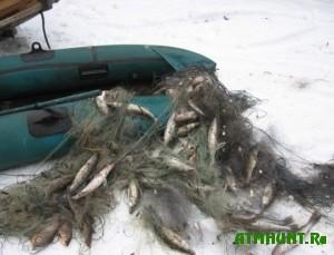 v-vitebskoj-oblasti-zaderzhali-nelegalnyx-postavshhikov-ryby