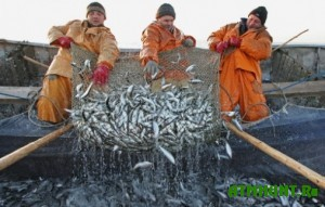 видео ловля селедки в черном море видео