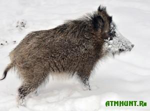 zhivotnye-gibnut-ot-ravnodushiya-cheloveka-a-ne-ot-bolshogo-snega