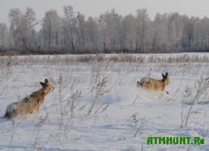 zhivotnye-stali-legkoj-dobychej-dlya-brakonerov-iz-velikogo-snega