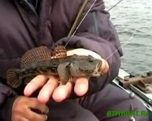 Azovskoe poberezh'e okkupirovali tysjachi rybakov