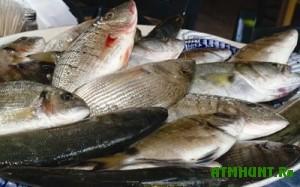 Brakon'ery vo vremja neresta ryby ne bojatsja dazhe tjur'my