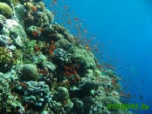 Kitajskie rybaki popali na 300 000 dollarov za povrezhdennye korally