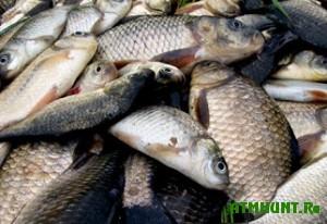 Luganskie inspektora iz#jali 17 kg dobytoj brakon'erami ryby