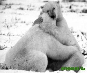 Medvedi tozhe umejut ljubit'