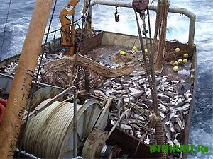 Na Azovskom more zaderzhali eshhe odnu brakon'erskuju gruppirovku
