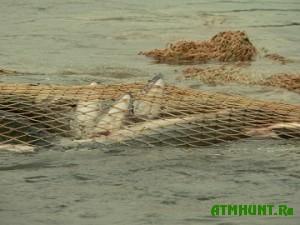 Primorskie brakon'ery nalovili ryby na 1750 dollarov shtrafa