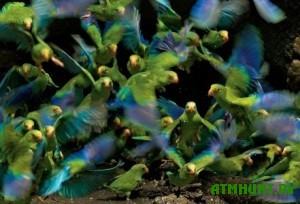 Samolet na Taiti podvergsja atake popugaev