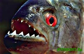 V Dnepre zavelis' piran'i i drugie jekzoticheskie vidy ryb