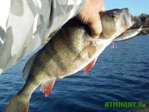 V dneprovskoj rybe zavelis' parazity