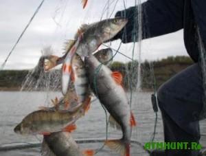 Vsego za sutki kremenchuzhskie brakon'ery vylovili ryby na 40 kg