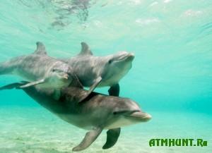delfiny-tozhe-umeyut-oplakivat-smert-svoix-detej