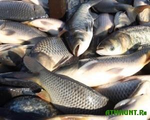 na-odnom-iz-rynkov-dzhankoya-izyato-desyatki-kilogrammov-ryby