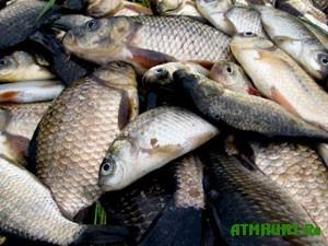 v-odesse-brakonery-vylovili-ryby-na-5-tys-grn