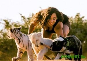 v-veterinarnoj-klinike-podruzhilis-tigr-lev-i-buldog